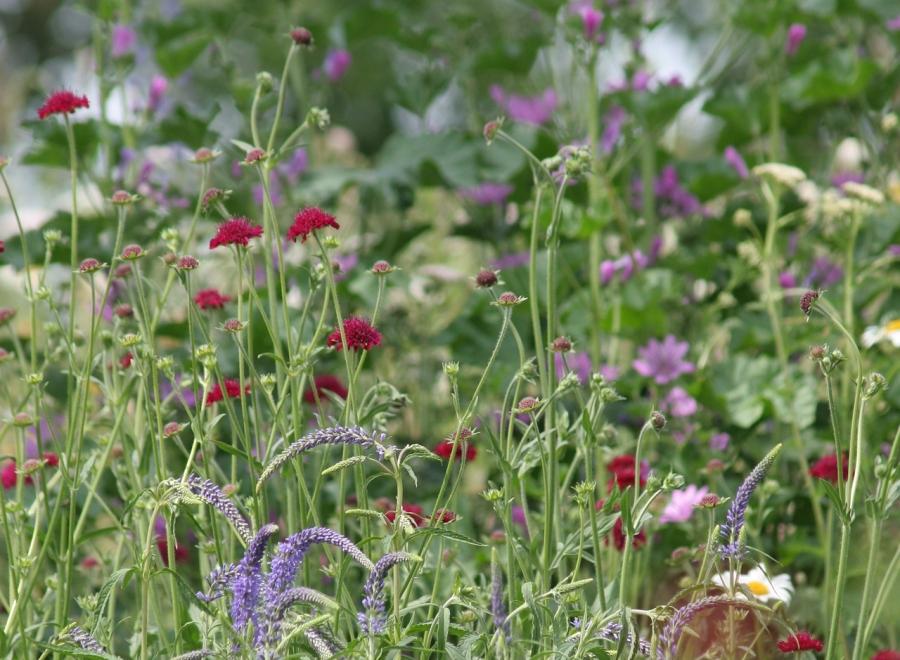 Biodiversitäts-Kneipenquiz am 05.10.2020 in Vettweiß